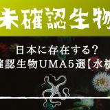 日本に存在する?未確認生物UMA【水棲系】
