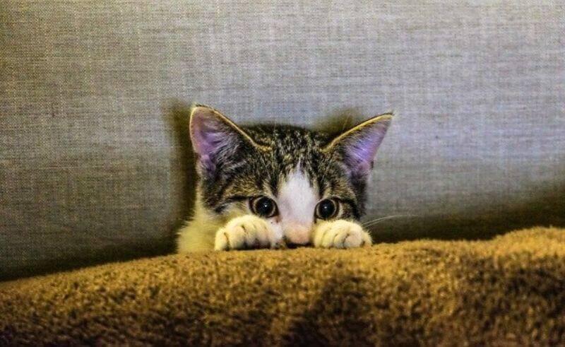 何かを見つめる子猫