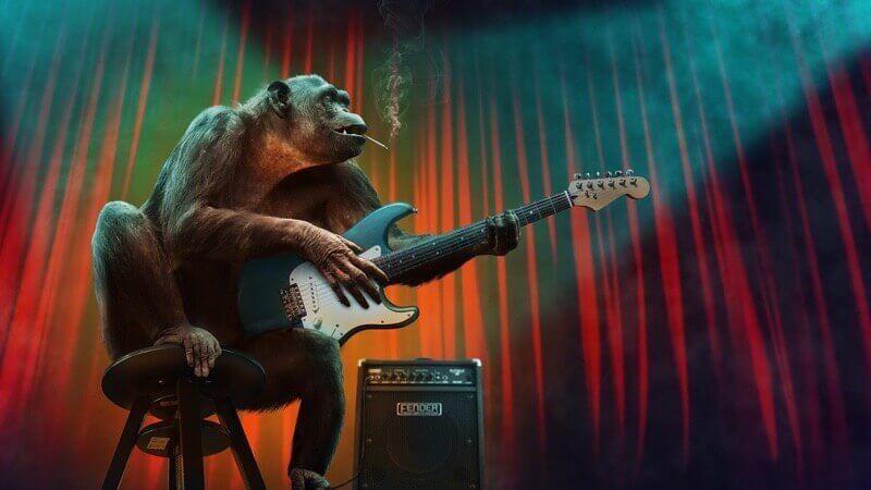 チンパンジーのコンサート