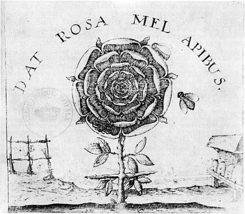 薔薇十字団