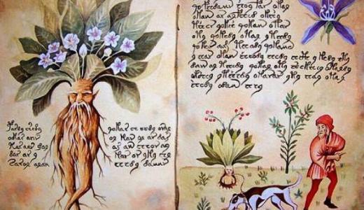 実在する有毒植物「マンドレイク」とは?数々の逸話や伝説を紹介します。