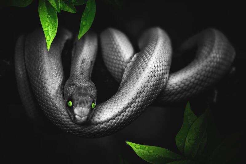 不気味な蛇